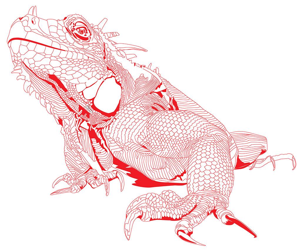 ec-marine-iguana1024